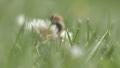05/06/2015: Bee